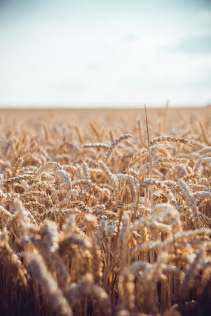 Brown Field During Daytime, photo by David Becker (unsplash.com)