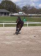 Kentucky Horse Park - thoroughbred in training
