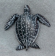 Leather Back Sea Turtle