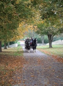 Shaker Village - wagon, from the past...