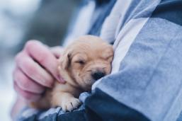 Sharing their warmth by Lydia Torrey (unsplash.com)