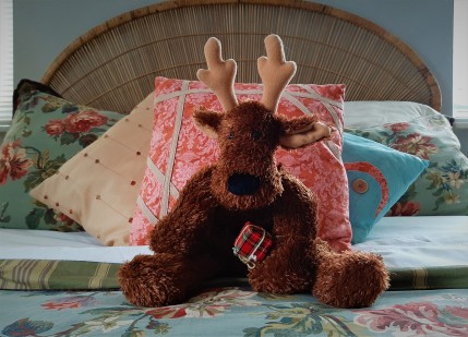 Blitzen shares our bedroom every Christmas