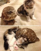 The Owl and the Pussycat (reddit.com)