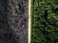 Apparently, no fires are allowed across this road - photo credit, Evgeniy Green (boredpanda.com)