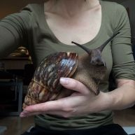 'Aw, such a cute little, um...' (Giant African Snail) - photo credit, reddit (boredpanda.com)