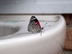 Butterfly #80 - photo credit, wubbleschwupp (boredpanda.com)