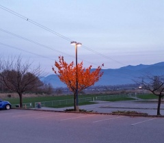 Fall leaves kept alive by lamplight