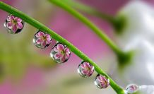 Flowers 'Embryos' - photo credit, Miki Asai (boredpanda.com)