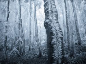 Frosted Trees - photo credit, Jan Bainar (boredpanda.com)