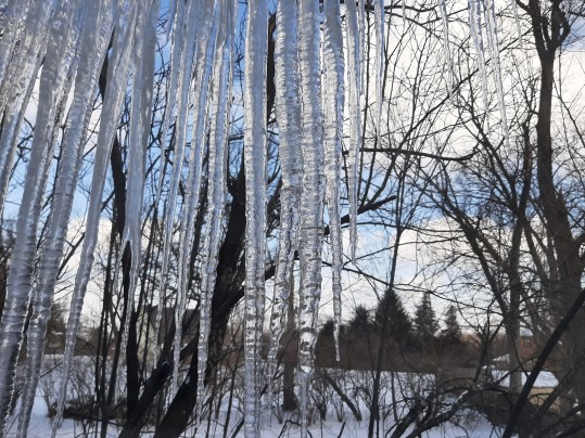 Icicles 2-19-21