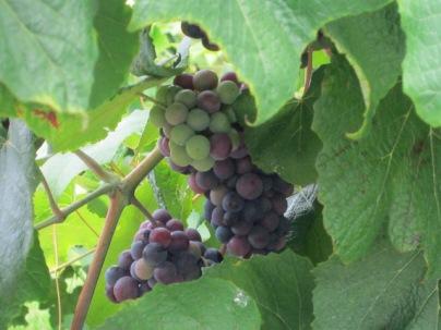 Lover's Leap Winery, Kentucky2