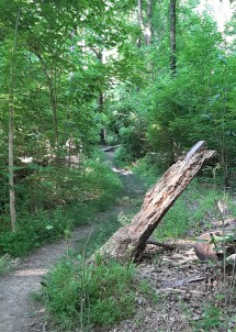 Mt. Airy Forest 6
