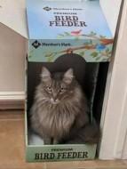 'Bird. Food. Any questions.' ~Cat (digsdigs.com)