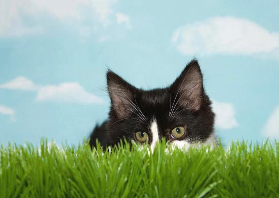 kitten-hunting-in-tall-grass-sheila-fitzgerald