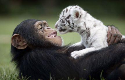 Arjana the chimp and child (earthporm.com)
