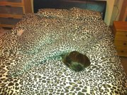 Bedspread with Head (techeblog.com)
