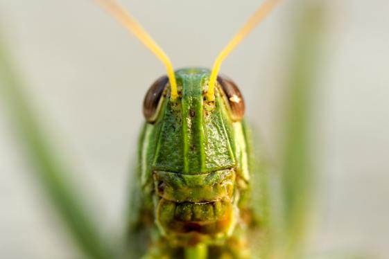 'Grasshopper Face' by Boris Smokrovic (unsplash.com)
