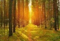 Path in the Woods (publicdomainpictures.net)
