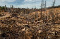 Ravaged Forest (oxfordfilms.com)