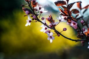 'Spring Awakening' by Markus Spiske (unsplash.com)