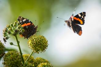 'Wait, I think we met before as caterpillars' - Vincent van Zalinge (unsplash.com)