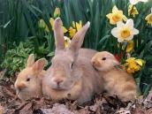 Bunny family (stylearena.net)