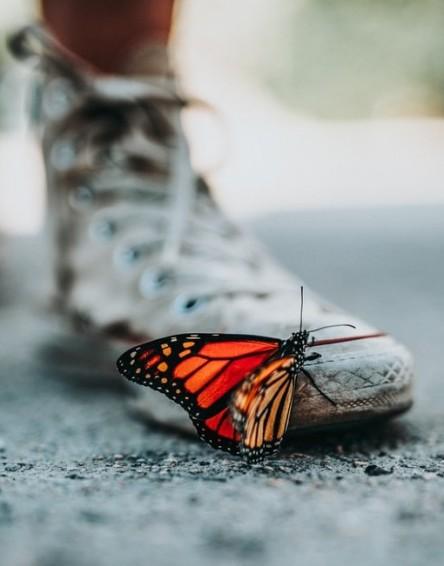 Butterfly - photo by Nathan Dumlao (unsplash.com)