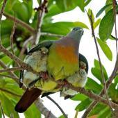 'Cute Mother Bird' (stylearena.net)