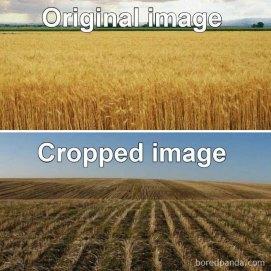 How to Crop an Image - memesoliteral (boredpanda.com)