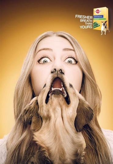Pedigree dog breath-fresheners (sortra.com)