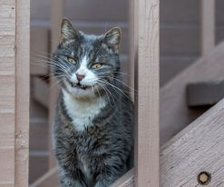 Real Life Cheshire Cat - recon455 (boredpanda.com)