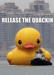 Release the Quackin (imgur.com)