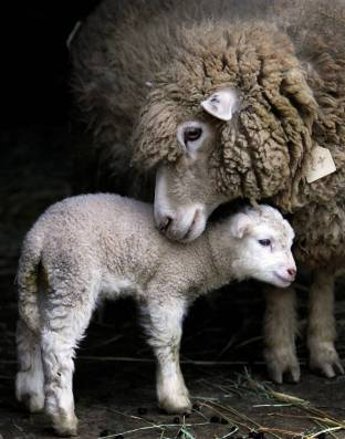 'Sheep with Baby Lamb' (stylearena.net)