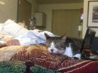 'Snuck kitty in to visit dying mom' (reddit.com)