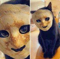 'So, I put this pancake mask on my cat, and I'm having recurring nightmares' -wick720 (boredpanda.com)