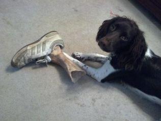 'So, um, it turns out rawhide chew toys look a lot like severed feet' - erethenn (boredpanda.com)