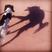 Sweet dog, scary shadow - Acetlyated_Morphine (boredpanda.com)