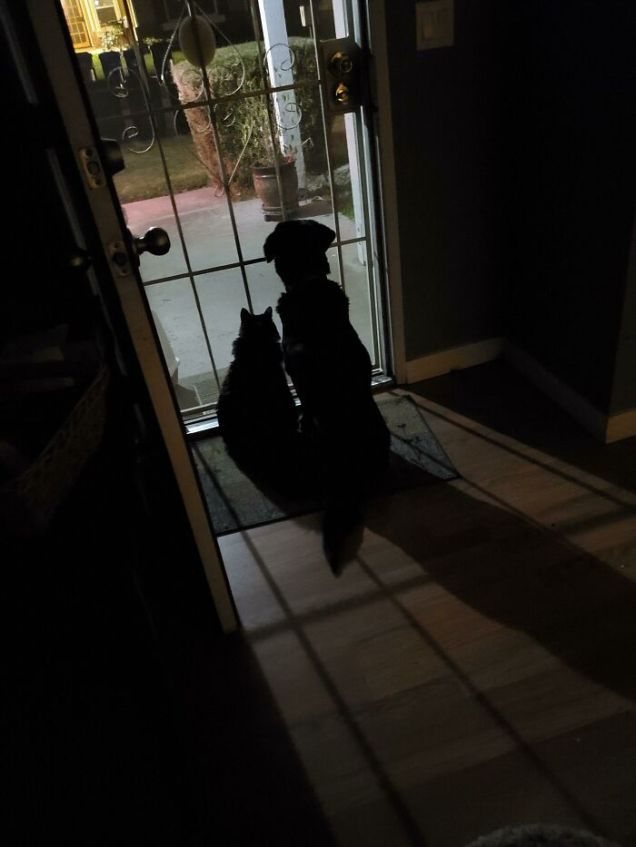 Waiting for Dad to Come Home - JonesMommy (boredpanda.com)