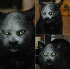 When your cat gets flour on his face and suddenly turns 'evil'- teddy-bear-the1st (boredpanda.com)