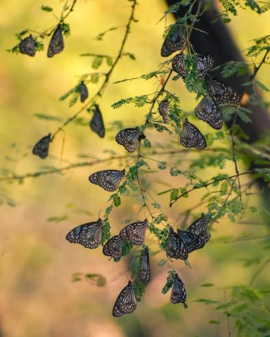 'Butterflies are nature's angels' by Navi Photography (unsplash.com)