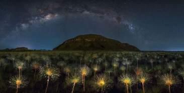 Cosmic Wildflowers, Brazil by Marcio Cabral (buzzerilla.com)