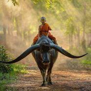 Cow. Boy. (imgur.com)