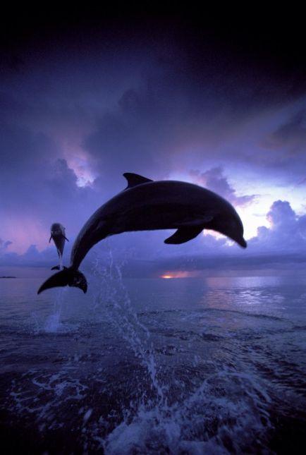 Dolphins - Rosanna Piano (pinterest.ca)