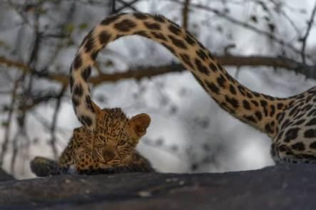 'Kitten' by Sergey Gorshkov (buzzerilla.com)