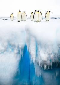 'Mind the Gap,' Antarctica (buzzerilla.com)
