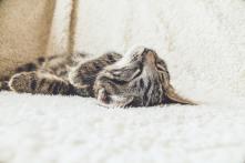 'Relaxed tabby cat' by Erik-Jan Leusink (unsplash.com)
