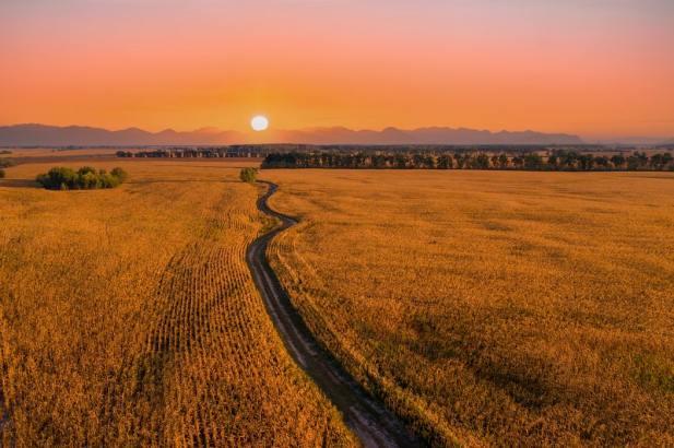 'Road in Fields' by Maksym Diachenko