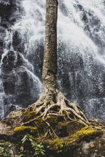 Standing Alone - photo by Zac Reiner (unsplash.com)
