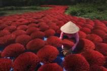 'The Road of Fortune,' Vietnam by Sian Koi Kua (buzzerilla.com)