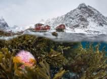 The Winter Lofoten by Сергей Луканкин (buzzerilla.com)